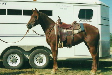 Noble-T Red Haired Mary (owned by Claire Christiansen)