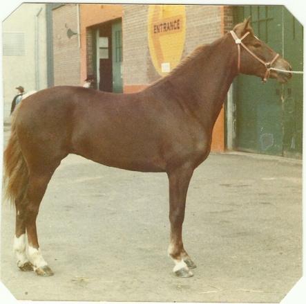 Sheritt Ethan Walker 1975