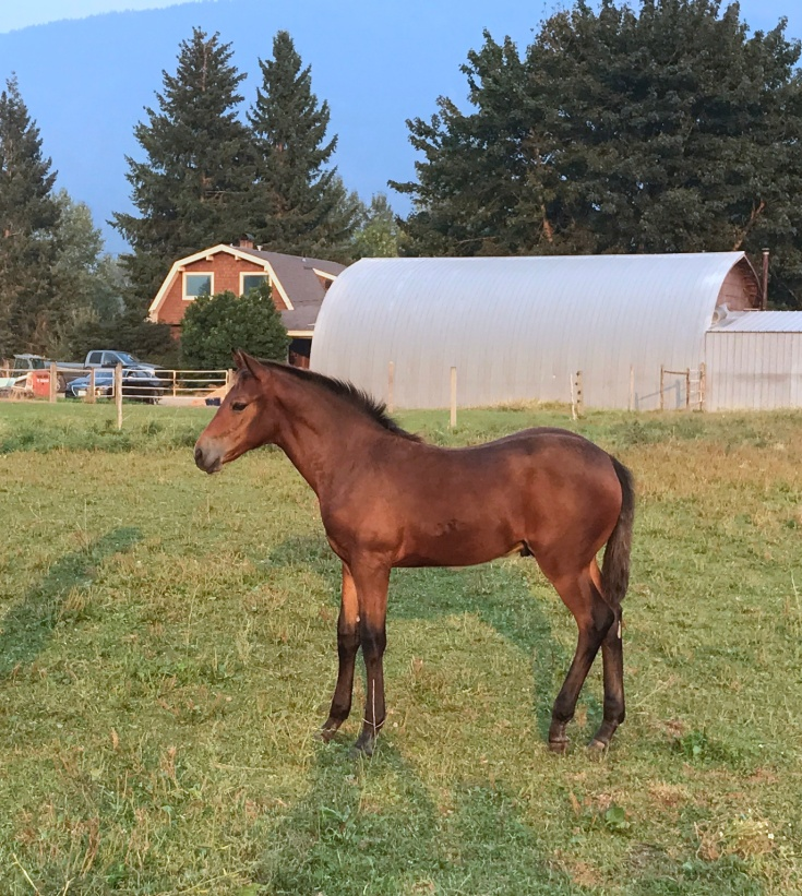 Noble-T Ranchhand 11