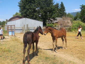 Noble-T Ranchhand and Noble-T Bandito RAF 1