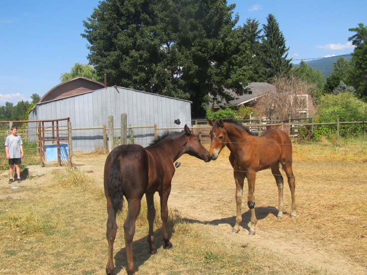 Noble-T Ranchhand RAF and Noble-T Bandito RAF 2