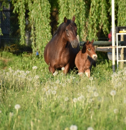 Noble-T Ranchhand and Noble-T Lena Lui 1