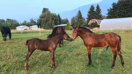 Noble-T Ranchhand and Noble-T Tia Maria 3