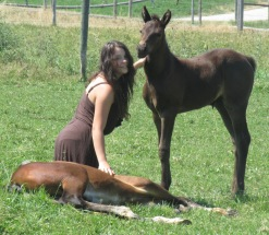 Noble-T Ranchhand and Noble-T Tia Maria 1