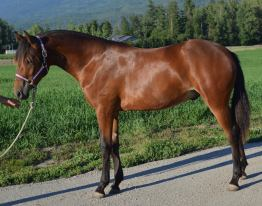 Noble-T Ranchhand 1